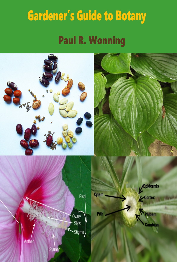 Sample Chapter - Formation and Structure of the Seed in Angiosperms